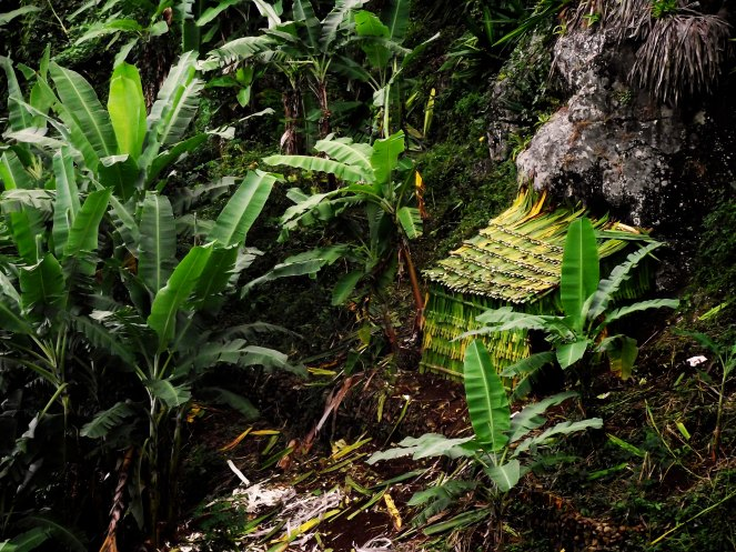 The island of Fogo is essentially one large volcano (3,000m above sea level). On the slopes of the volcano are productive coffee and banana plantations.
